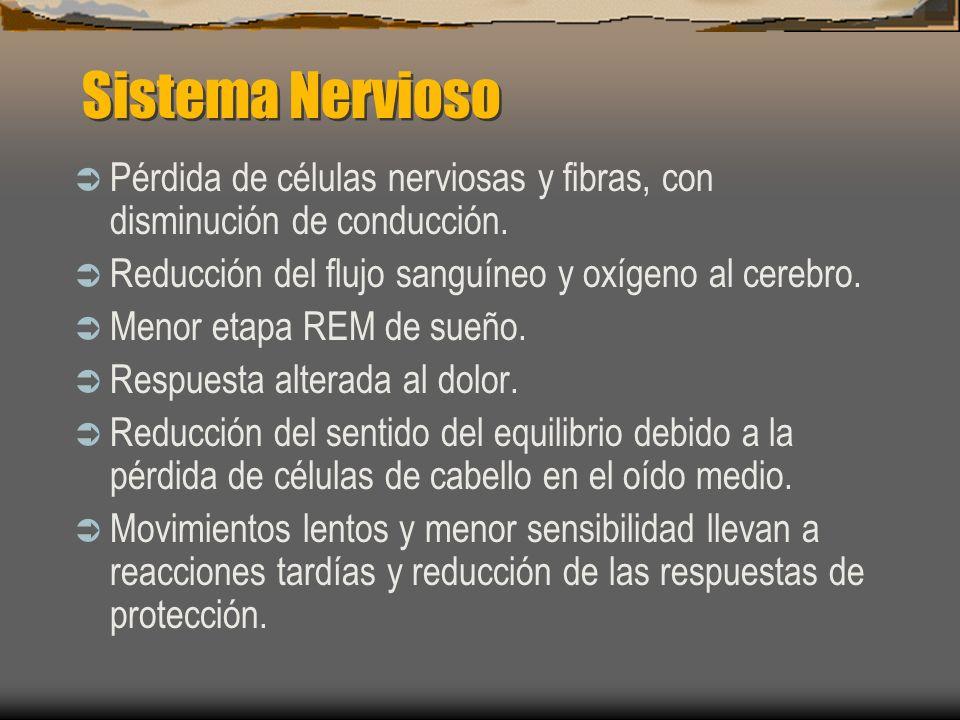 Sistema Nervioso Pérdida de células nerviosas y fibras, con disminución de conducción. Reducción del flujo sanguíneo y oxígeno al cerebro. Menor etapa