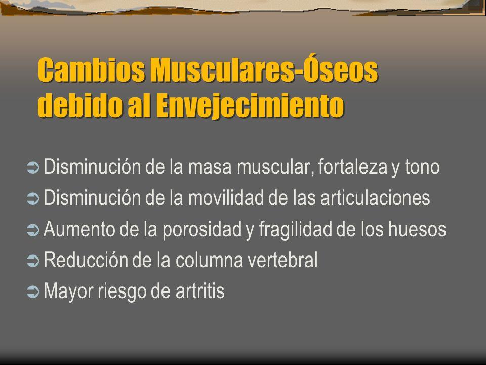 Cambios Musculares-Óseos debido al Envejecimiento Disminución de la masa muscular, fortaleza y tono Disminución de la movilidad de las articulaciones