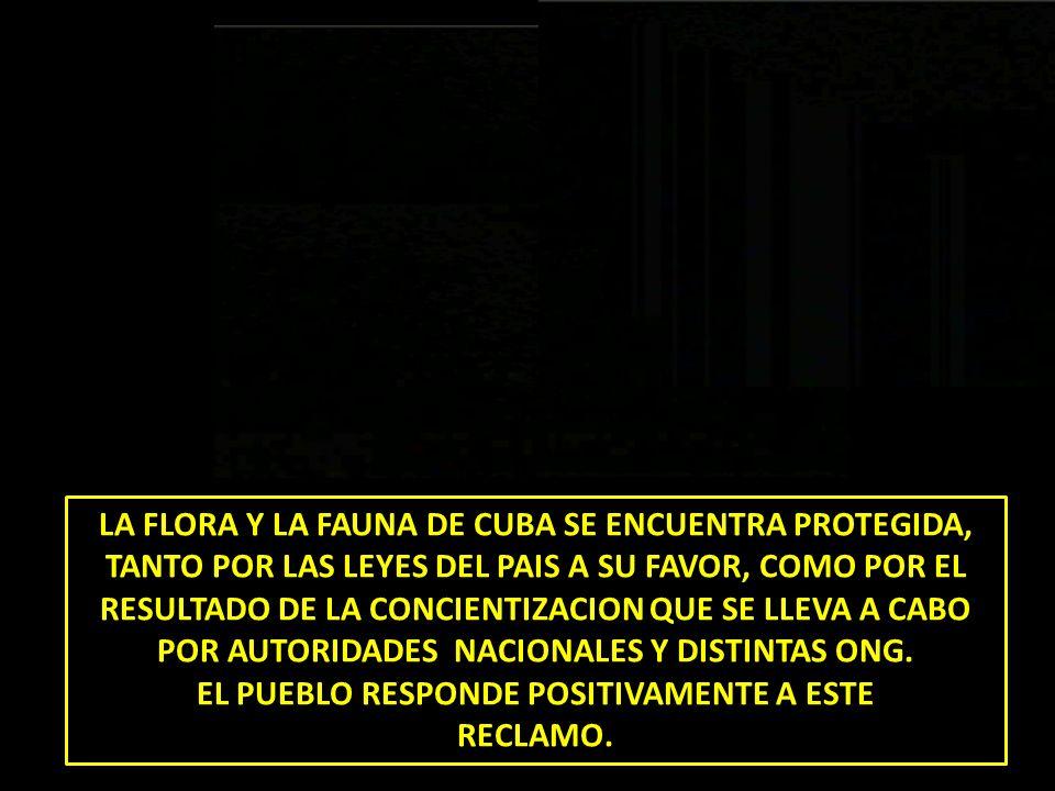 LA FLORA Y LA FAUNA DE CUBA SE ENCUENTRA PROTEGIDA, TANTO POR LAS LEYES DEL PAIS A SU FAVOR, COMO POR EL RESULTADO DE LA CONCIENTIZACION QUE SE LLEVA