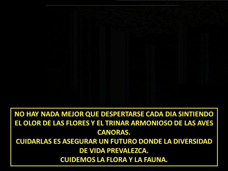 NO HAY NADA MEJOR QUE DESPERTARSE CADA DIA SINTIENDO EL OLOR DE LAS FLORES Y EL TRINAR ARMONIOSO DE LAS AVES CANORAS. CUIDARLAS ES ASEGURAR UN FUTURO