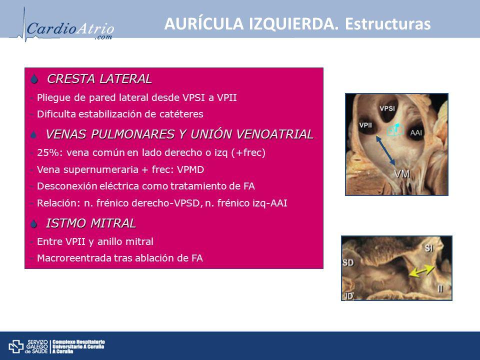 AURÍCULA IZQUIERDA. Estructuras CRESTA LATERAL CRESTA LATERAL - Pliegue de pared lateral desde VPSI a VPII - Dificulta estabilización de catéteres VEN