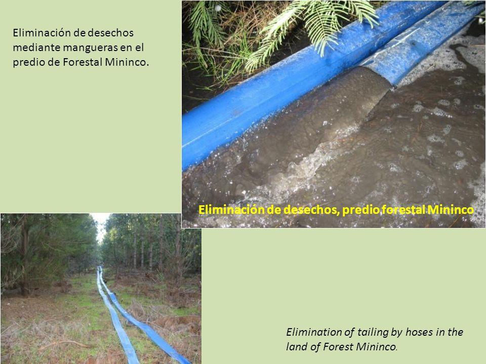 Eliminación de desechos, predio forestal Mininco Eliminación de desechos mediante mangueras en el predio de Forestal Mininco.
