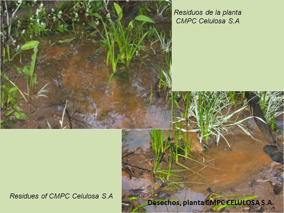 Desechos, planta CMPC CELULOSA S.A.