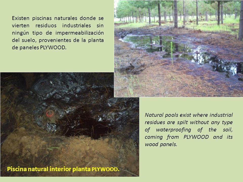 Piscina natural interior planta PLYWOOD.