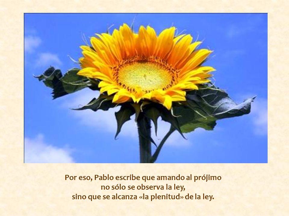 Por eso, Pablo escribe que amando al prójimo no sólo se observa la ley, sino que se alcanza «la plenitud» de la ley.