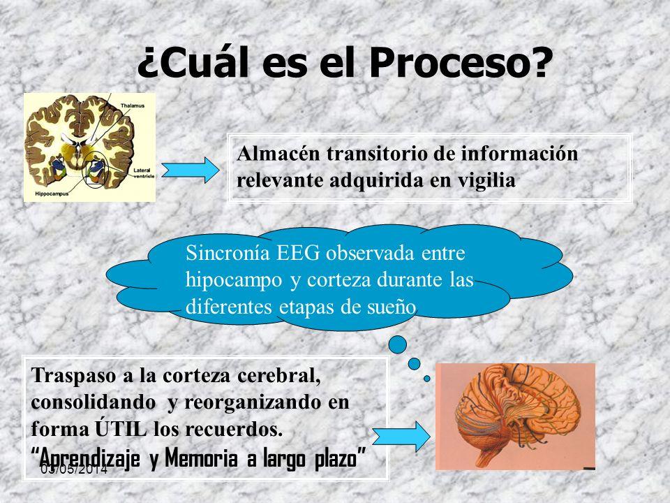 03/05/2014 ¿Cuál es el Proceso? Almacén transitorio de información relevante adquirida en vigilia Traspaso a la corteza cerebral, consolidando y reorg