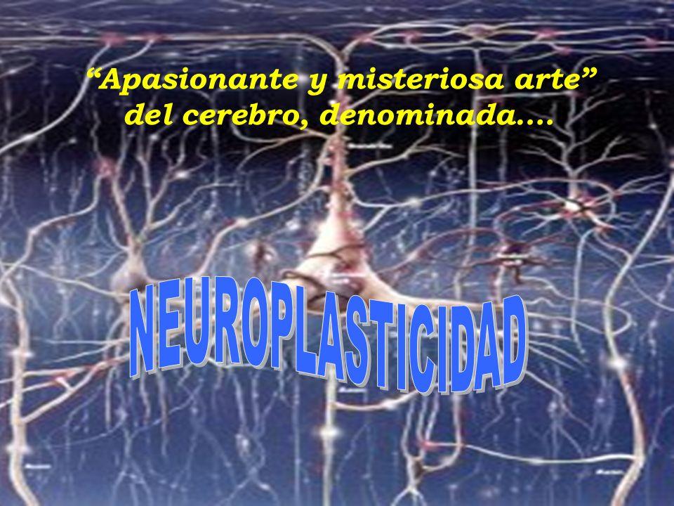 03/05/2014 Apasionante y misteriosa arte del cerebro, denominada….