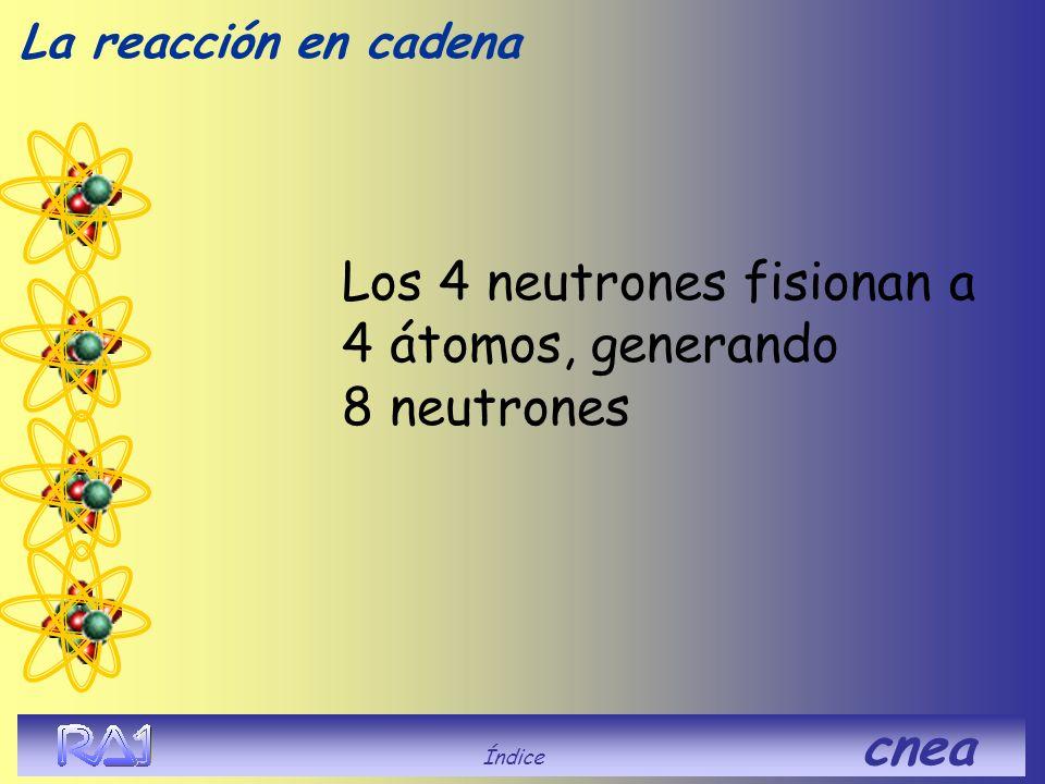 Los 4 neutrones fisionan a 4 átomos, generando 8 neutrones La reacción en cadena Índice cnea