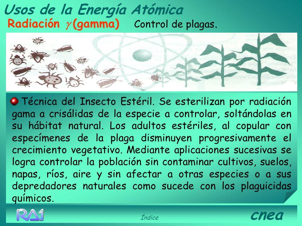 Usos de la Energía Atómica Radiación (gama) Control de plagas. Índice cnea Se irradian distintos componentes de las colmenas para el control de parási