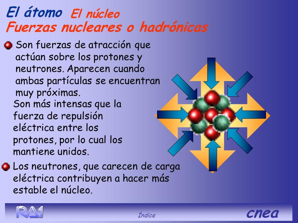 Fuerzas nucleares o hadrónicas El átomo Son más intensas que la fuerza de repulsión eléctrica entre los protones, por lo cual los mantiene unidos. Son