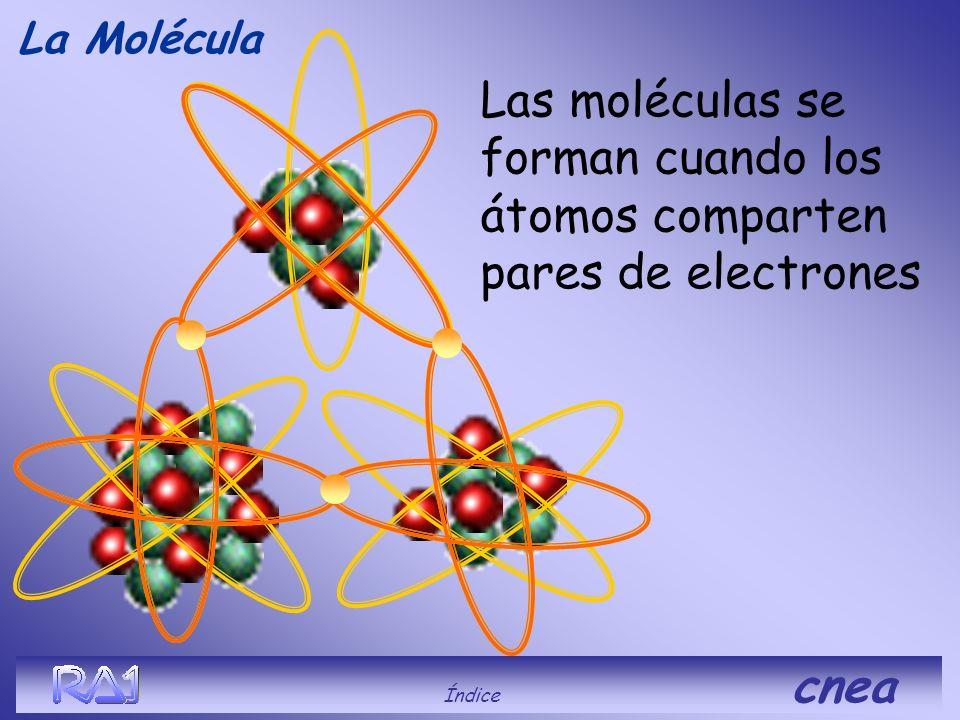 La Molécula ¿Qué es? Índice cnea