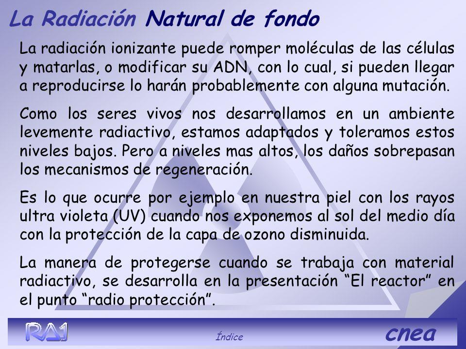 La RadiaciónNatural de fondo Los seres vivos somos radiactivos. Nuestros propios cuerpos son levemente radiactivos, a lo largo de nuestras vidas incor
