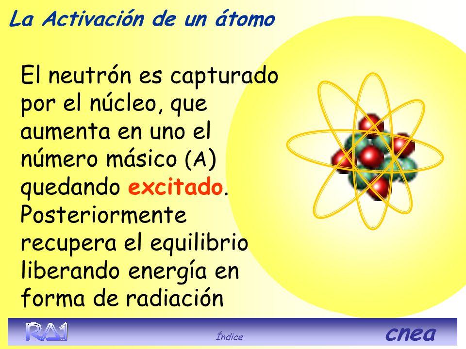 El neutrón es capturado por el núcleo, que aumenta en uno el número másico (A ) quedando excitado. Posteriormente recupera el equilibrio liberando ene