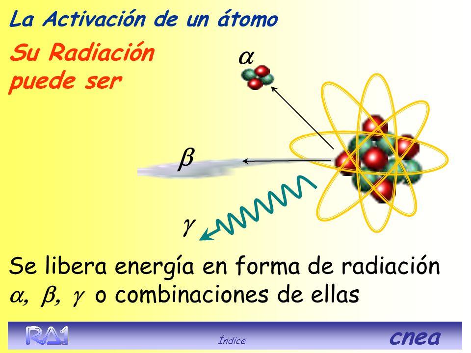 La Activación de un átomo El neutrón es capturado por el núcleo, que aumenta en uno el número másico (A ) quedando excitado. Posteriormente recupera e