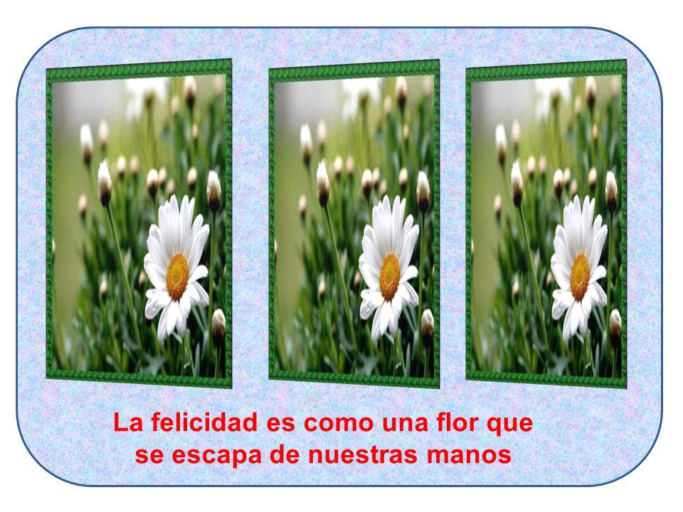 La felicidad es como una flor que se escapa de nuestras manos