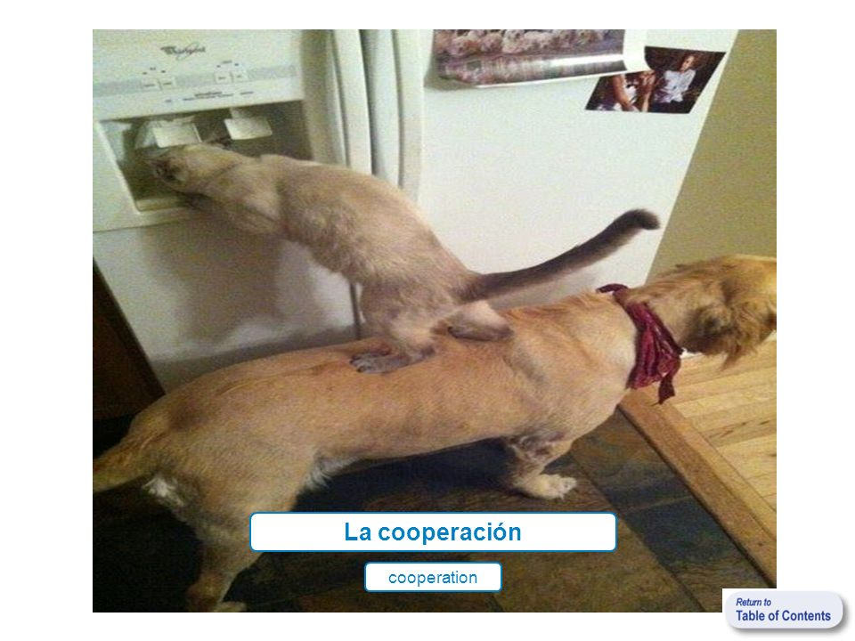 La cooperación cooperation