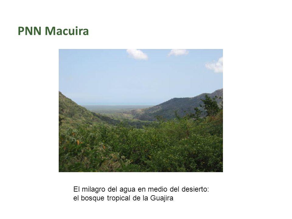 PNN Macuira El milagro del agua en medio del desierto: el bosque tropical de la Guajira