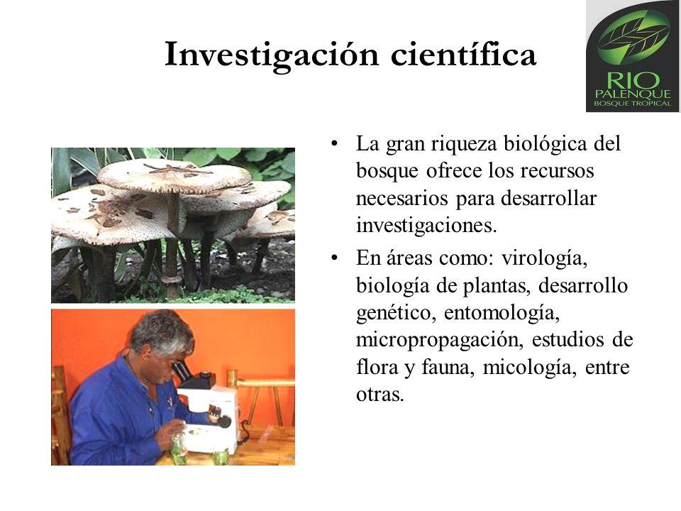 Investigación científica La gran riqueza biológica del bosque ofrece los recursos necesarios para desarrollar investigaciones. En áreas como: virologí