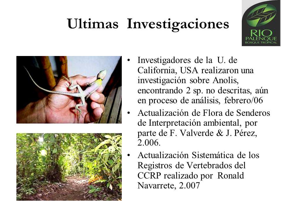 Ultimas Investigaciones Investigadores de la U. de California, USA realizaron una investigación sobre Anolis, encontrando 2 sp. no descritas, aún en p