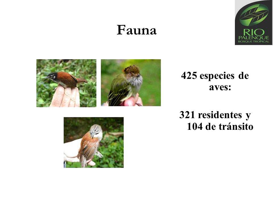 Fauna 425 especies de aves: 321 residentes y 104 de tránsito