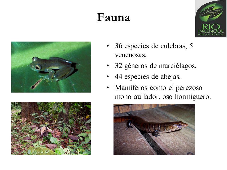 Fauna 36 especies de culebras, 5 venenosas. 32 géneros de murciélagos. 44 especies de abejas. Mamíferos como el perezoso mono aullador, oso hormiguero
