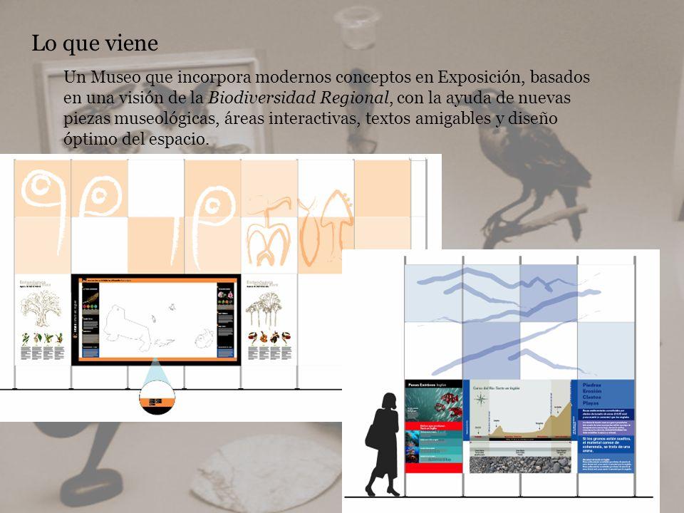 Lo que viene Un Museo que incorpora modernos conceptos en Exposición, basados en una visión de la Biodiversidad Regional, con la ayuda de nuevas pieza