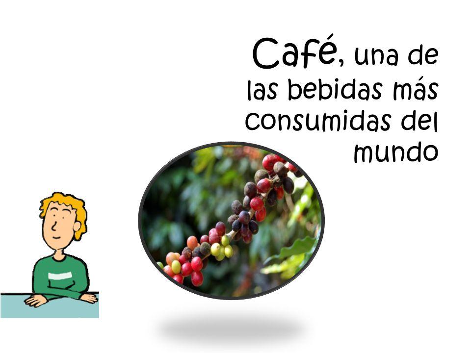 Los árboles del café o cafetos provienen de África central y fueron llevados al sur de la India, de allí a Java y luego al Caribe francés.