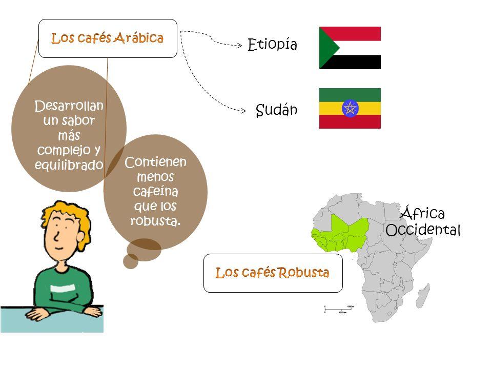 Desarrollan un sabor más complejo y equilibrado Contienen menos cafeína que los robusta. Etiopía Sudán África Occidental