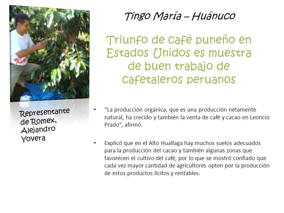 Tingo María – Huánuco Triunfo de café puneño en Estados Unidos es muestra de buen trabajo de cafetaleros peruanos La producción orgánica, que es una p