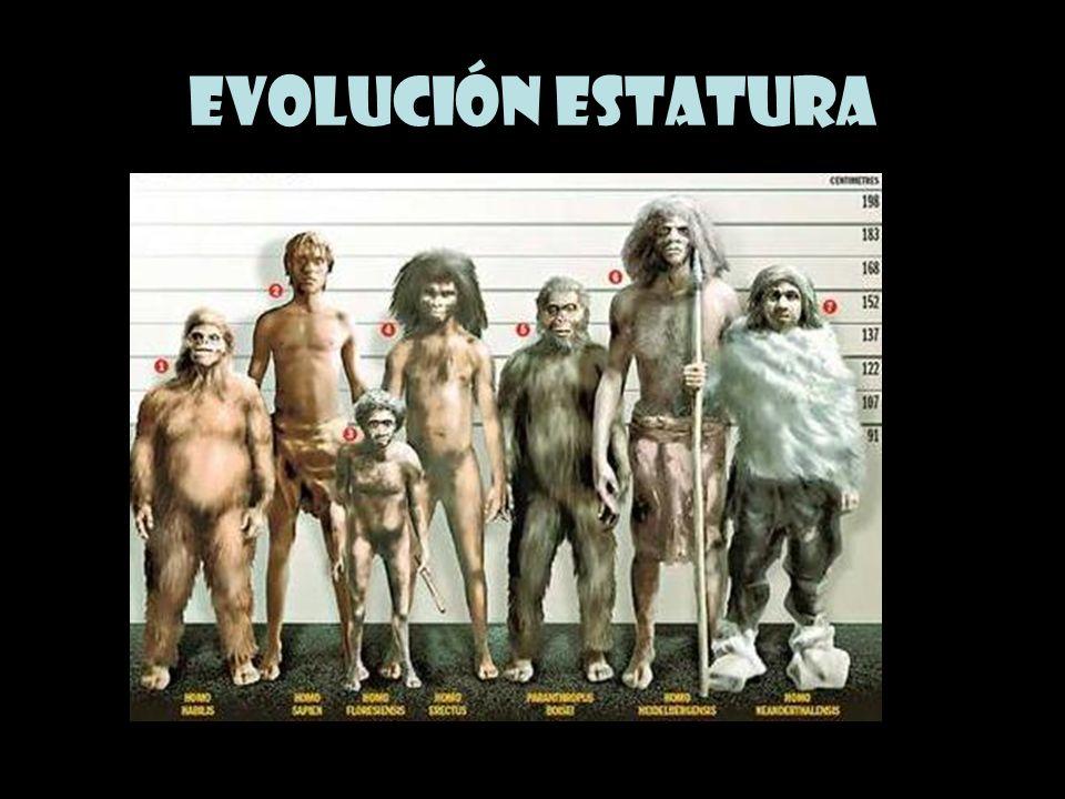 Evolución estatura