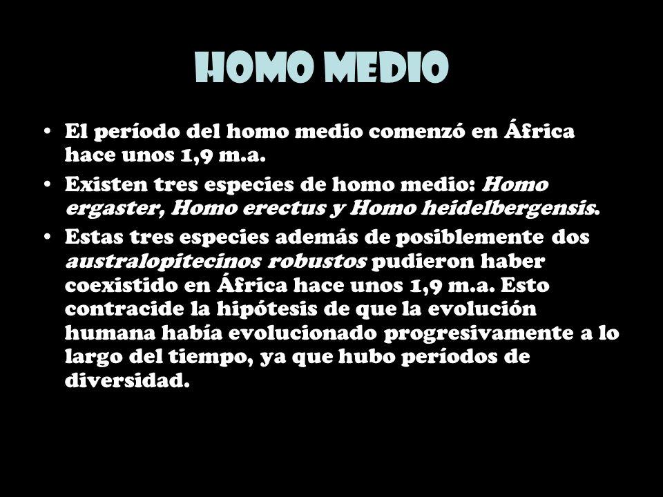 Homo medio El período del homo medio comenzó en África hace unos 1,9 m.a. Existen tres especies de homo medio: Homo ergaster, Homo erectus y Homo heid