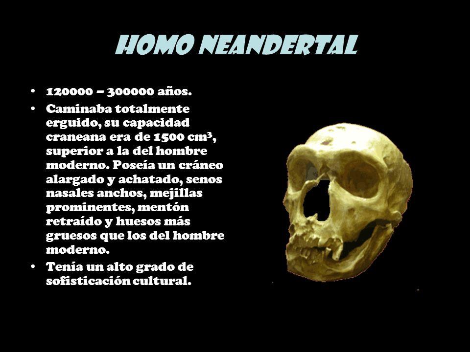 Homo Neandertal 120000 – 300000 años. Caminaba totalmente erguido, su capacidad craneana era de 1500 cm 3, superior a la del hombre moderno. Poseía un