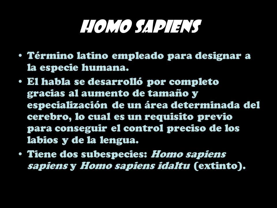 Homo sapiens Término latino empleado para designar a la especie humana. El habla se desarrolló por completo gracias al aumento de tamaño y especializa