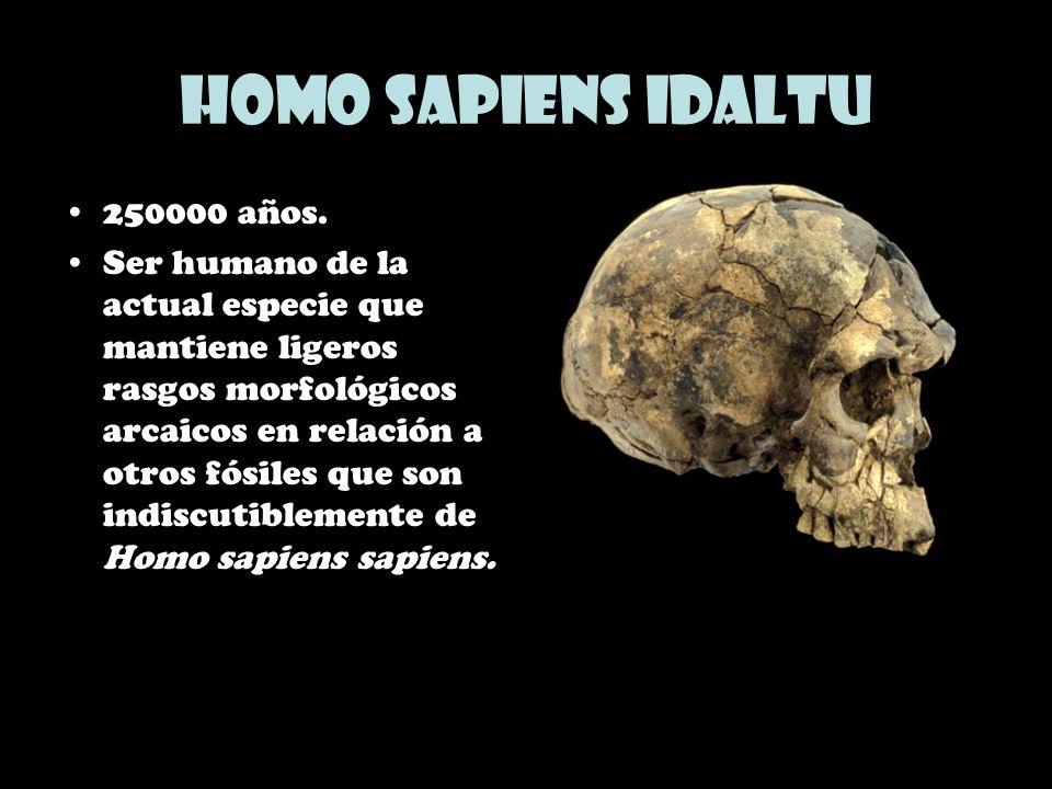 Homo sapiens idaltu 250000 años. Ser humano de la actual especie que mantiene ligeros rasgos morfológicos arcaicos en relación a otros fósiles que son