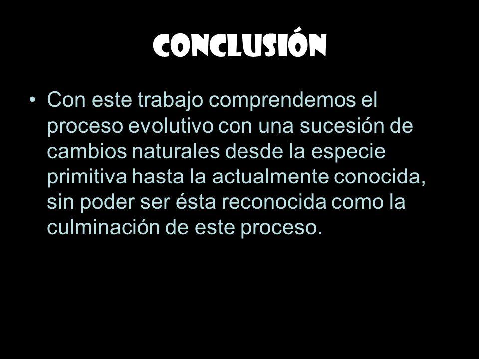 Conclusión Con este trabajo comprendemos el proceso evolutivo con una sucesión de cambios naturales desde la especie primitiva hasta la actualmente co
