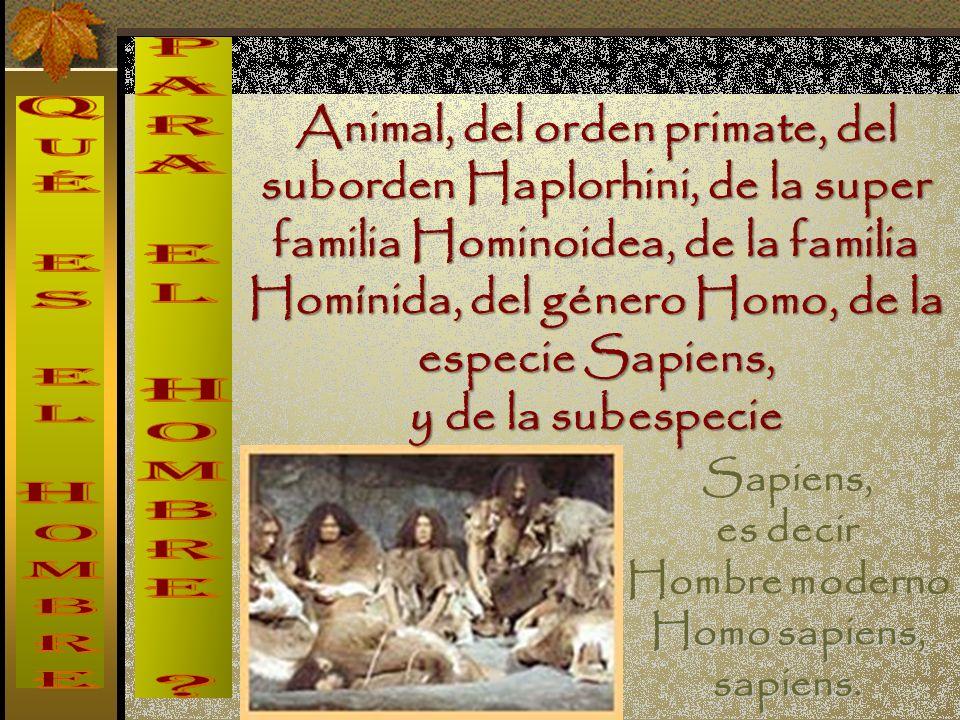 Animal, del orden primate, del suborden Haplorhini, de la super familia Hominoidea, de la familia Homínida, del género Homo, de la especie Sapiens, y