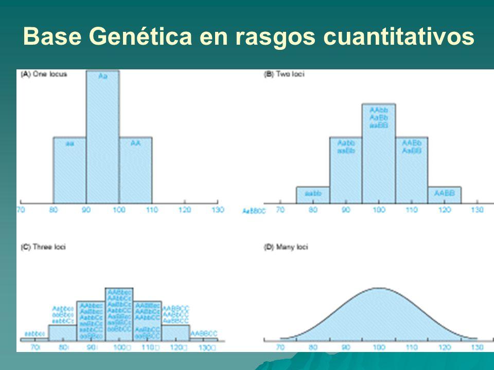 Base Genética en rasgos cuantitativos