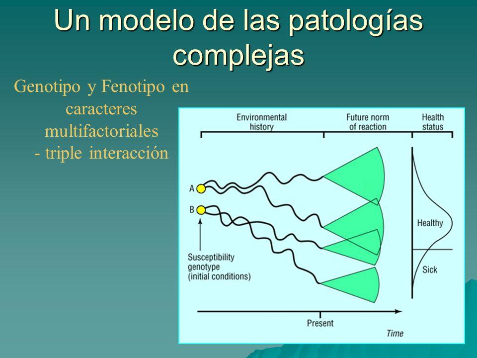 Genotipo y Fenotipo en caracteres multifactoriales - triple interacción Un modelo de las patologías complejas