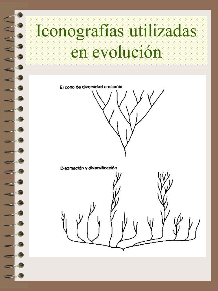 Iconografías utilizadas en evolución