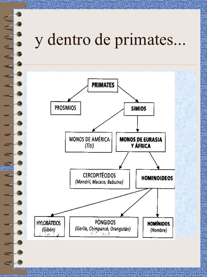 MODIFICACIONES EN LOS CRÁNEOS