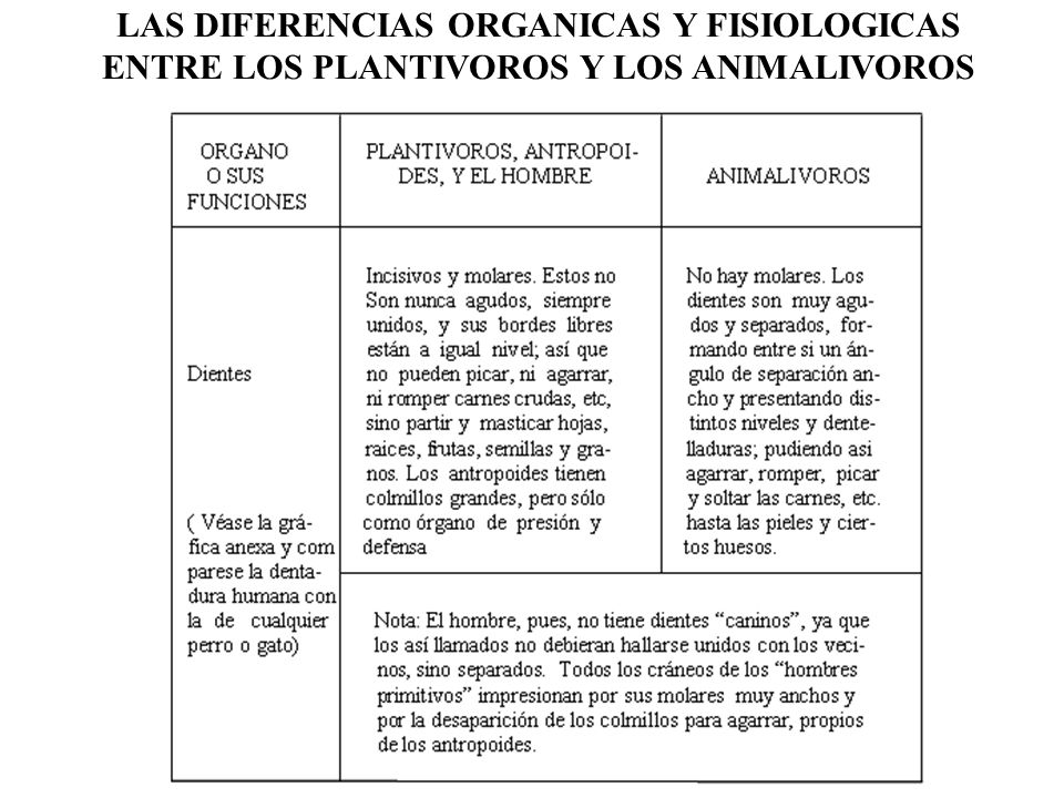 LAS DIFERENCIAS ORGANICAS Y FISIOLOGICAS ENTRE LOS PLANTIVOROS Y LOS ANIMALIVOROS
