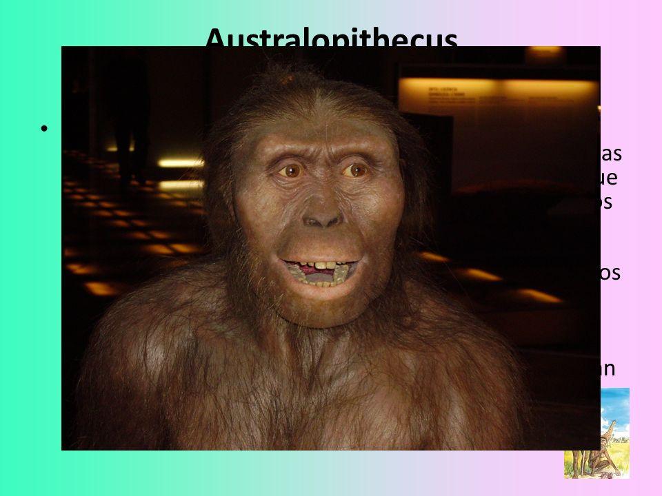 Australopithecus Sus restos demostraron que estos homínidos medían más de un metro de estatura y que sus caderas, piernas y pies se aparecían más a los de los seres humanos que a los de los simios.
