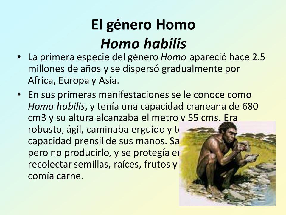 El género Homo Homo habilis La primera especie del género Homo apareció hace 2.5 millones de años y se dispersó gradualmente por Africa, Europa y Asia.