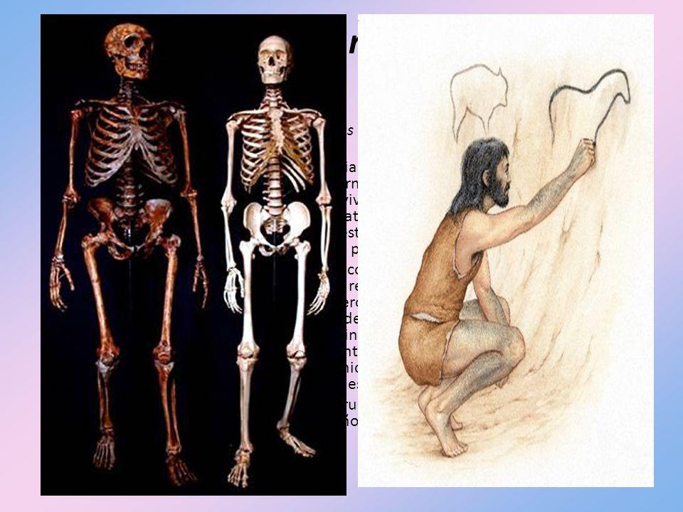 Homo sapiens neanderthalis Una o más subespecies del Homo erectus evolucionaron hasta llegar al Homo sapiens, un nuevo tipo físico.