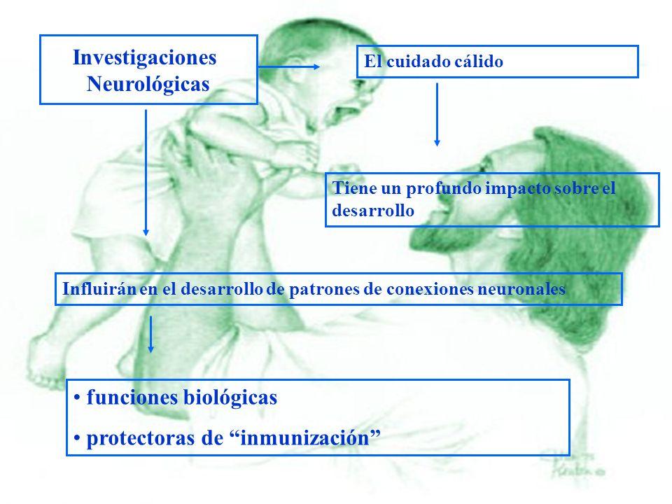 Investigaciones Neurológicas El cuidado cálido Tiene un profundo impacto sobre el desarrollo Influirán en el desarrollo de patrones de conexiones neur