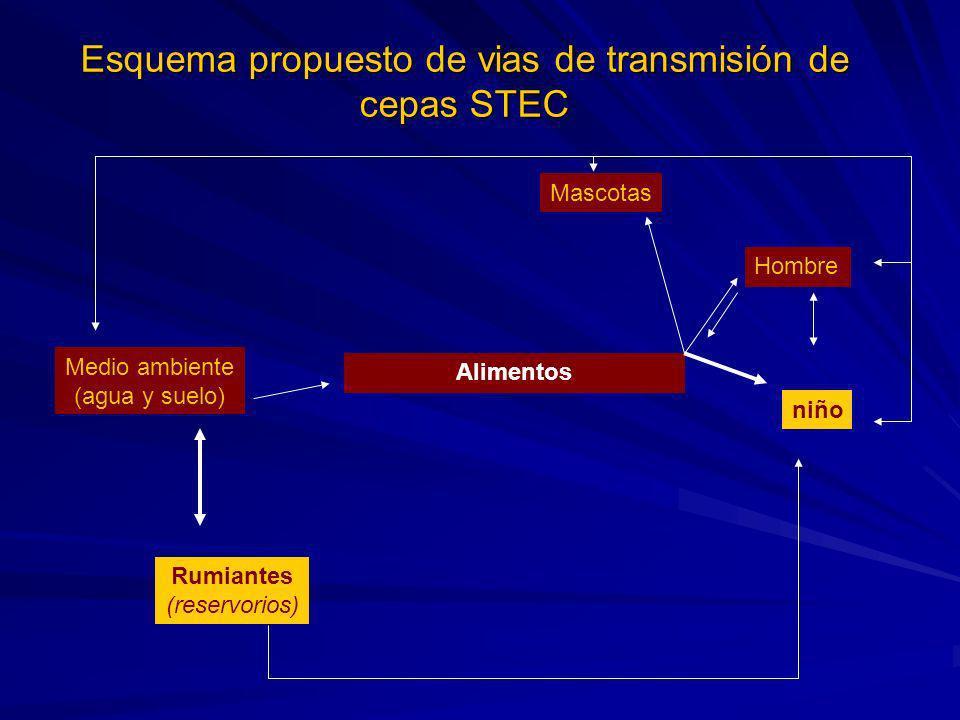 Esquema propuesto de vias de transmisión de cepas STEC Medio ambiente (agua y suelo) Alimentos Mascotas Hombre niño Rumiantes (reservorios)