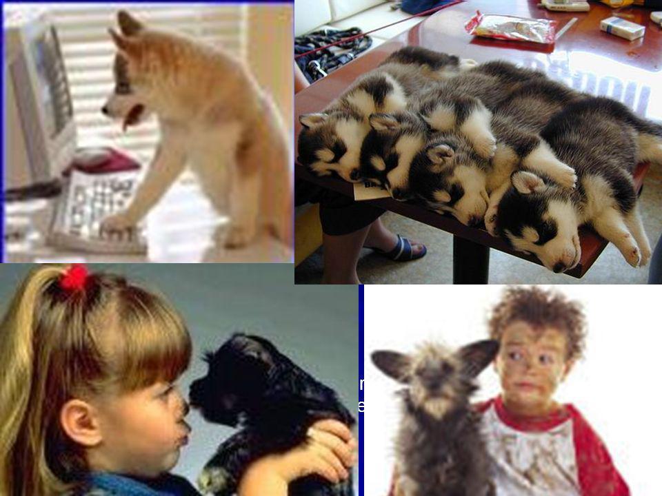 Relación entre el hombre y los animales de compañía en la Ciudad de Buenos Aires: 34% de viviendas que albergan alguna mascota: 95% poseen uno o más p
