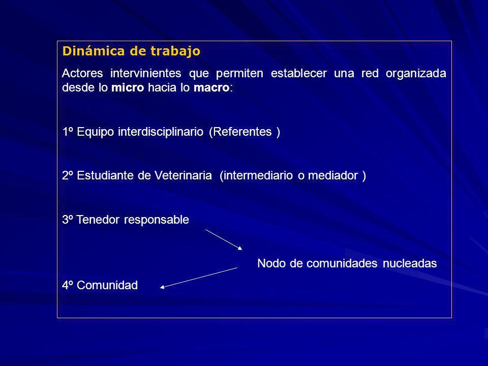 Dinámica de trabajo Actores intervinientes que permiten establecer una red organizada desde lo micro hacia lo macro: 1º Equipo interdisciplinario (Ref