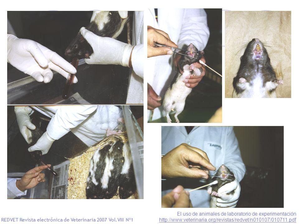 REDVET Revista electrónica de Veterinaria 2007 Vol.VIII Nº1 El uso de animales de laboratorio de experimentación http://www.veterinaria.org/revistas/r