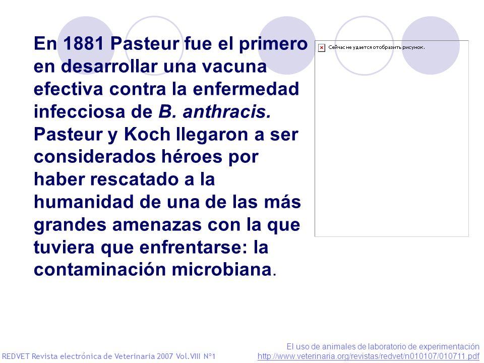 En 1881 Pasteur fue el primero en desarrollar una vacuna efectiva contra la enfermedad infecciosa de B. anthracis. Pasteur y Koch llegaron a ser consi